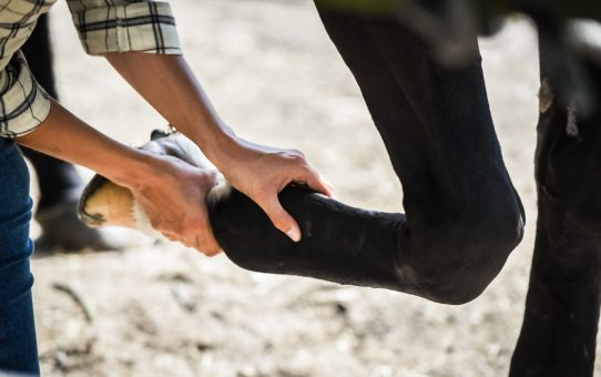 "About my practice: What is ""vet approval"" and why I won't see your horse without it"