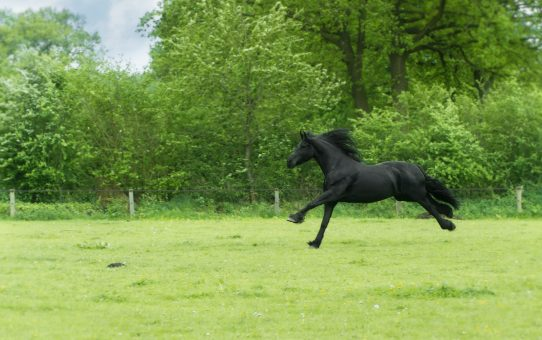 9 fun facts about your horse's body you might not know